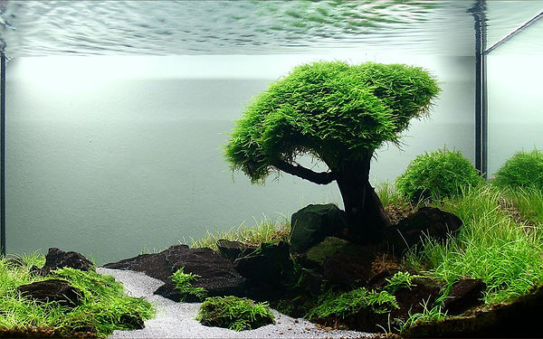 оформление аквариума рязань