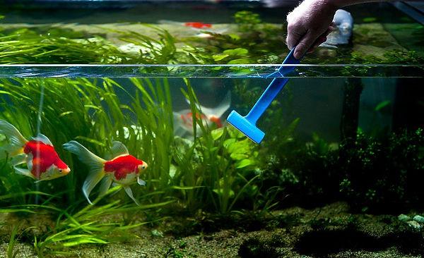чистка акваримов рязань