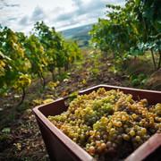 les vins lorrains