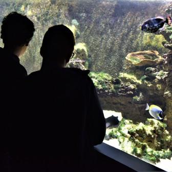 2019 11 réouverture du muséum-aquarium