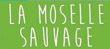moselle_sauvage.JPG