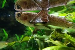 Nancy muséum aquarium