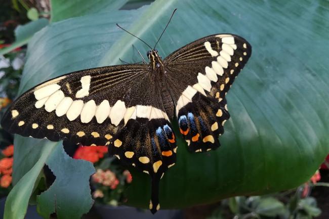 Nancy, JM Pelt - Vivez l'effet papillon