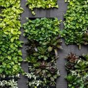 les végétaux font le mur