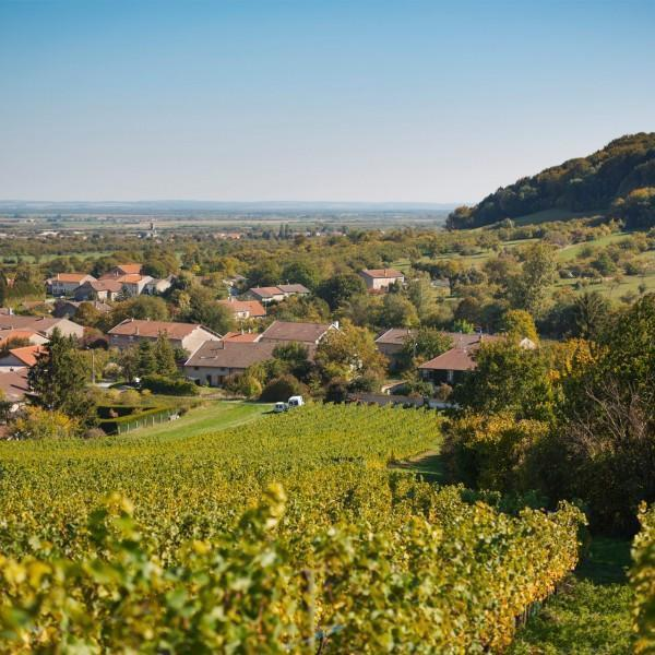 Nancy, vins lorrains