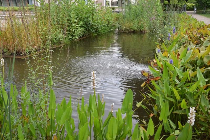 Nancy, les jardins d'eau
