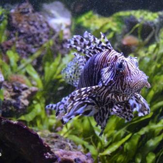 muséum-aquarium
