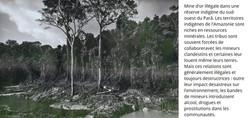 Forêt nationale de Crepori, Parâ, 25 mai 2019