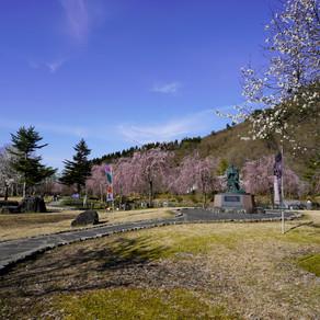 銭渕公園の桜