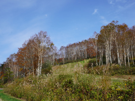ドラゴンドラに乗って田代高原へ行って来ました。