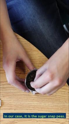 How to make a biodegradable planter
