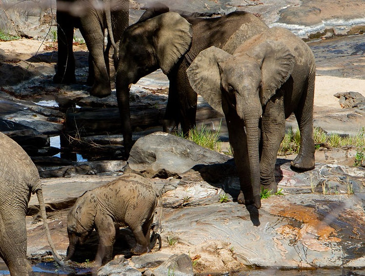 Elephants come to the river to drink_edited.jpg
