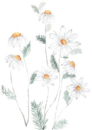 Daisys Watercolor.jpg