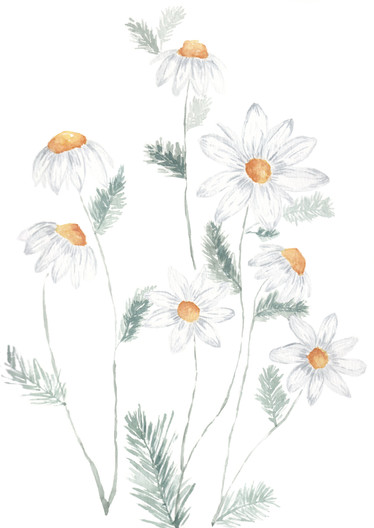 Daisys Watercolor.jpg
