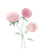 Peonies Watercolor.jpg