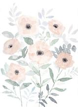 Peach Anemone Watercolor.jpg