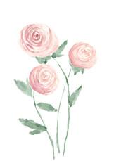 Roses Watercolor.jpg