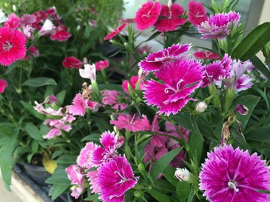 Copy of Plants_15_seasonal_plants.jpg