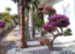 08_bougainvillea_gravel_ornamental_stone