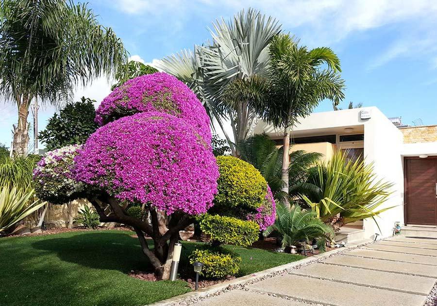 Excl_Trop_LCA_08_Landscape_design_garden