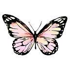 pink butterfly 742125808.jpg