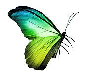 Green%20butterfly%20123776989_edited.jpg