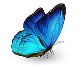 blues butterfly 132083303.jpg