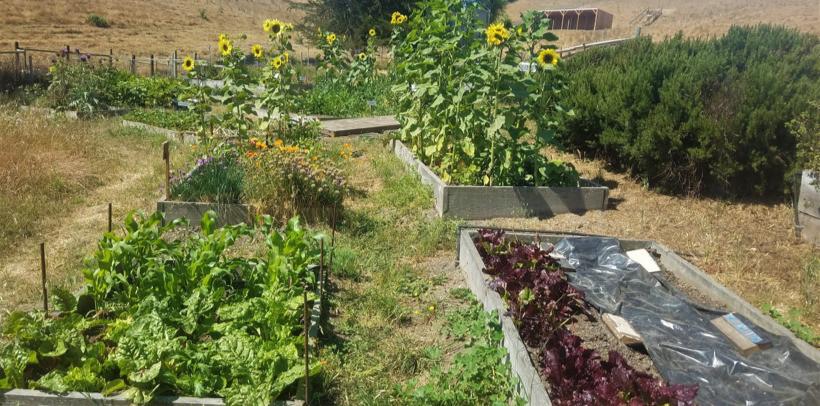 Thrive and Grow Bokashi System