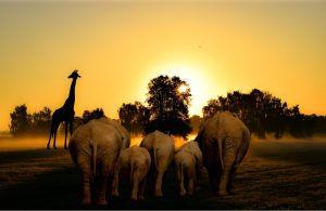 africa-travel-300x195.jpg