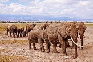 elephants-458990_640.jpg
