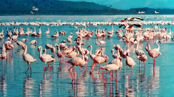 pink-flamingo-1484781_640