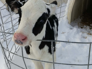 What Do Farmers Do in the Winter?