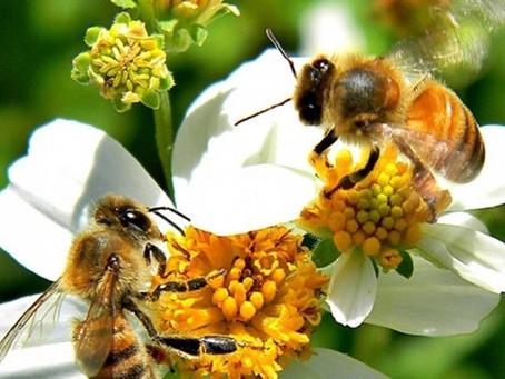 ¡Cultivemos flores nativas y salvemos a las abejas!