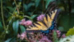 Flutter-1-WMs.jpg