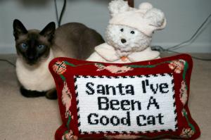 Rev. Kathy's beloved cat