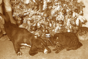 Barney (left) and Botchie (right) sharing space under the tree