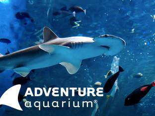 Adventure Aquarium Field Trip