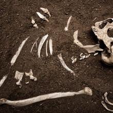 Antropología Criminal y Antropología Forense
