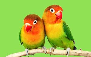 Parrots_edited.jpg