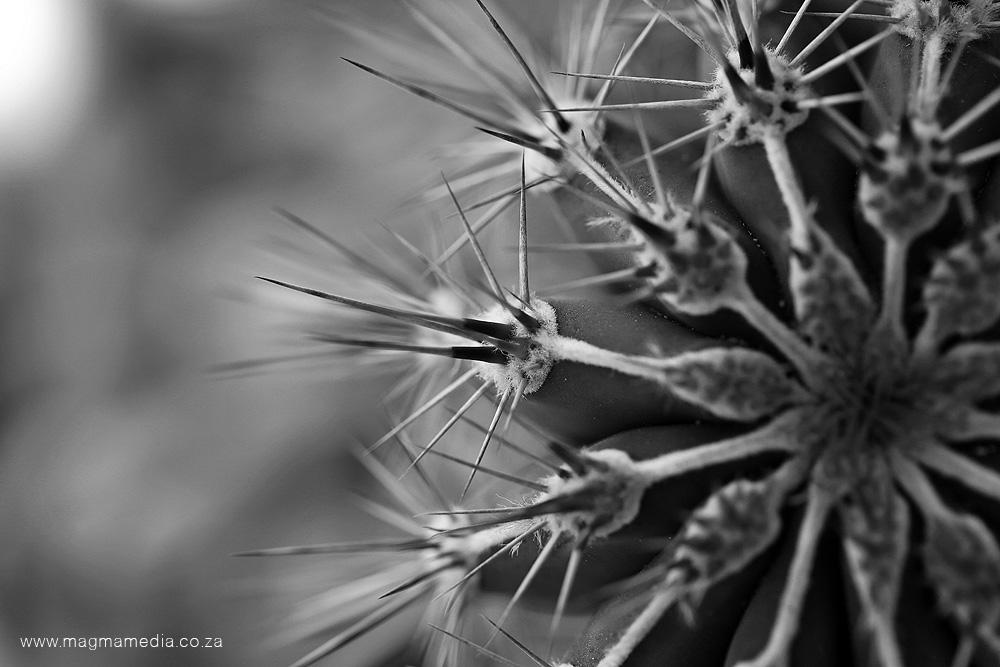 Fine art photography (17)