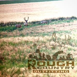 big buck scouting..JPG