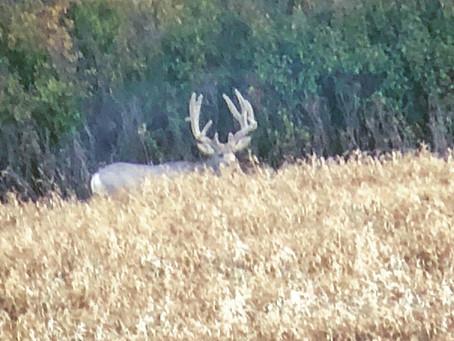 2019 Rut Mule Deer Hunt.