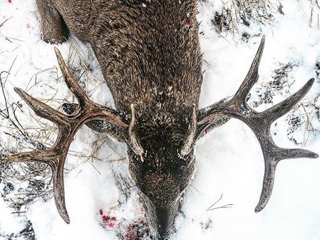 Whitetail Special.