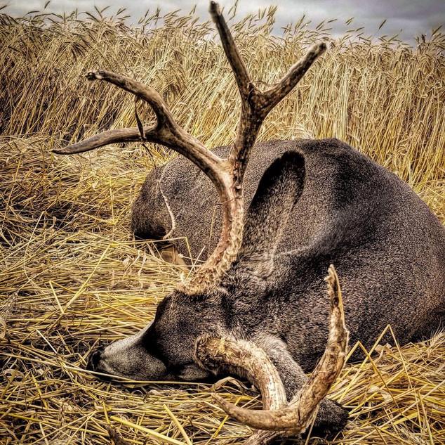 shawns buck.JPG