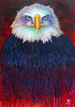 Birds 1 Bald Eagle