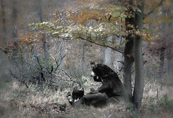 animals_bears_in_the_woods