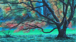 Autumn at Westonbirt