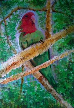 Birds 4 Lovebird
