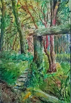 Woodland sketch