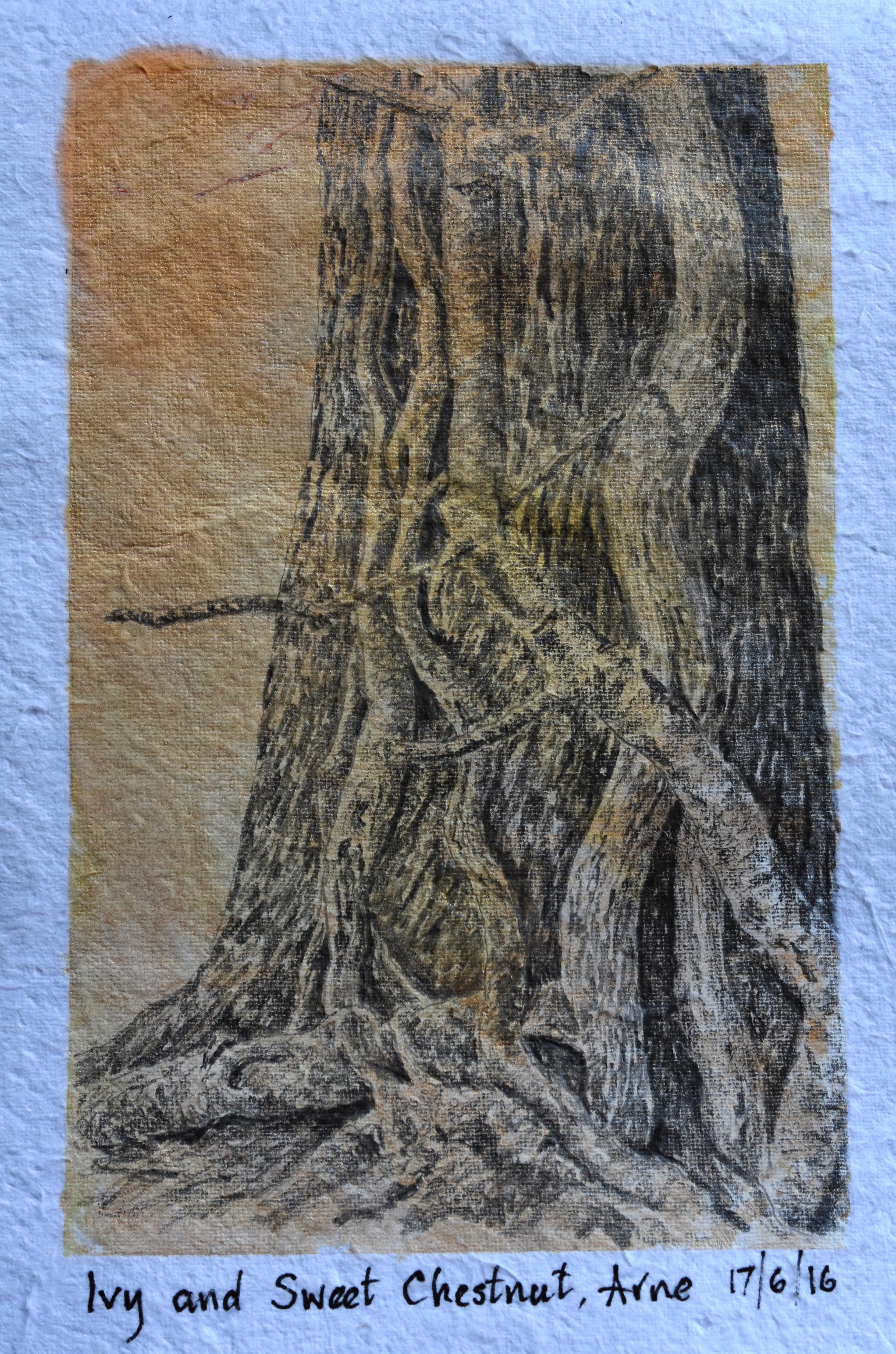 Arne, Chestnut trunk